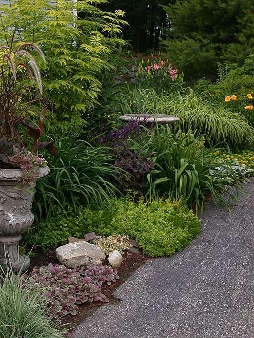 Perennials Forum   GardenWeb
