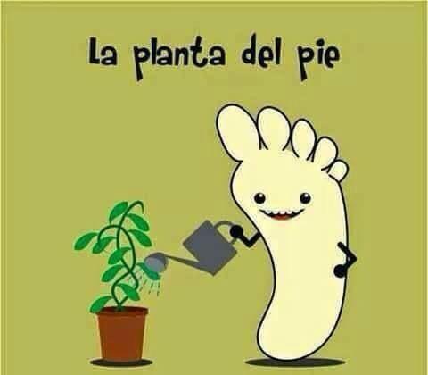 Planta del pie
