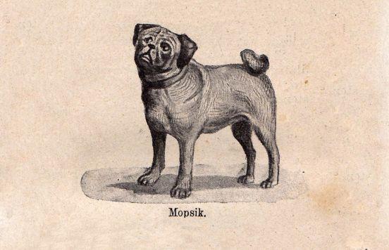 Zaginione psy osiemnastowiecznej Warszawy