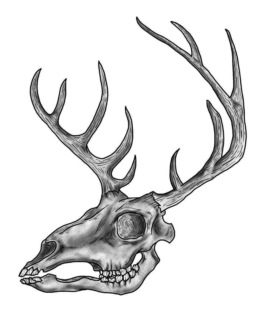 Deer Skull Clipart : skull, clipart, Drawings, Skulls, Download, Skull, Drawing,, Animal, Drawing