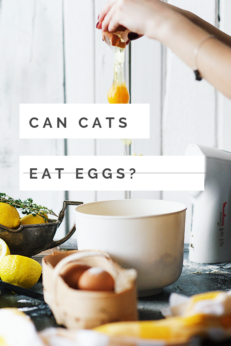 Can Cats Eat Eggs? Things to do at home, Fun things to