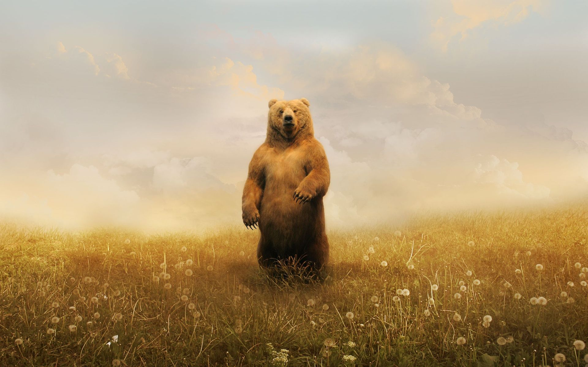 bear standing up | inked | pinterest | bear wallpaper, bear art and
