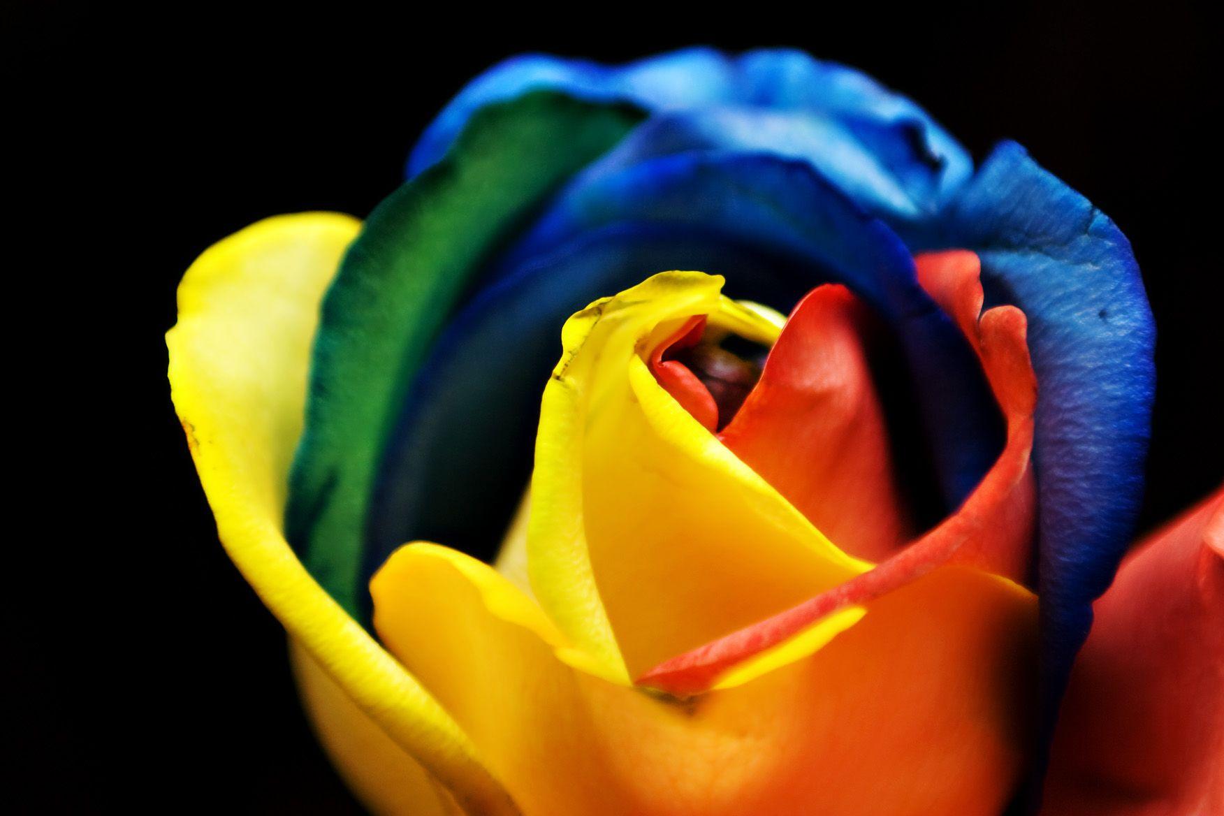 Neon Rainbow Roses Wallpaper