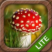 Mushrooms LITE - The ultimate mushroom field guide for your pocket!