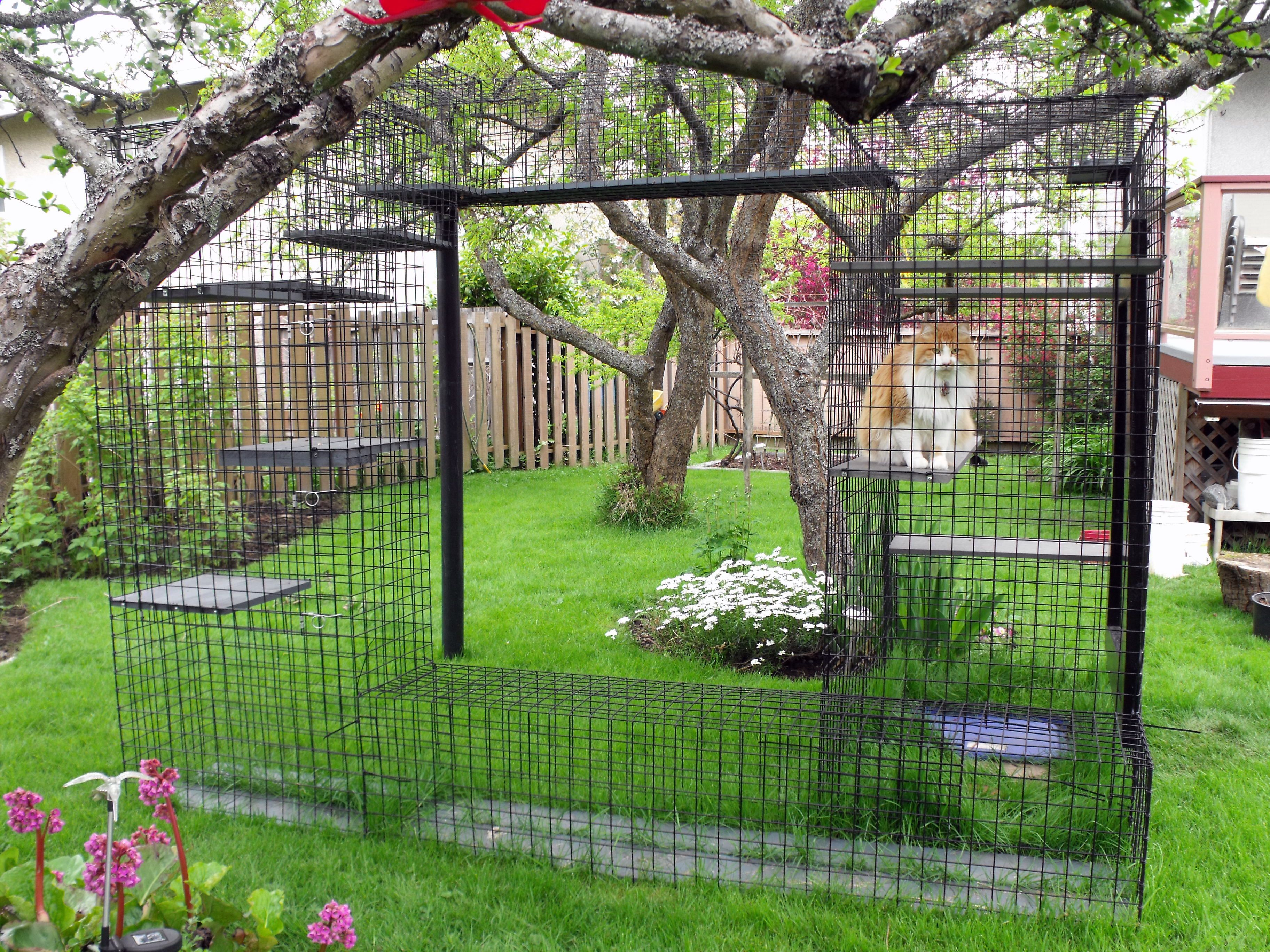 Outdoor cat enclosure Beautiful World Living Environments .abeautifulwor. & Outdoor cat enclosure Beautiful World Living Environments www ...