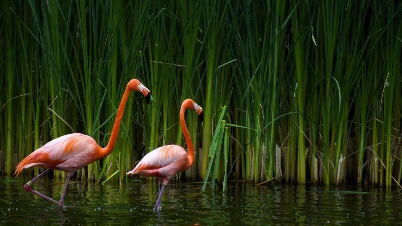 Flamingos High Resolution