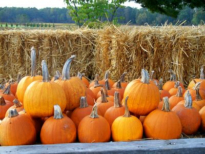 Thoughtful Social Studies: Pumpkin Season: Is Collaborative Learning the Flavor of the Week?