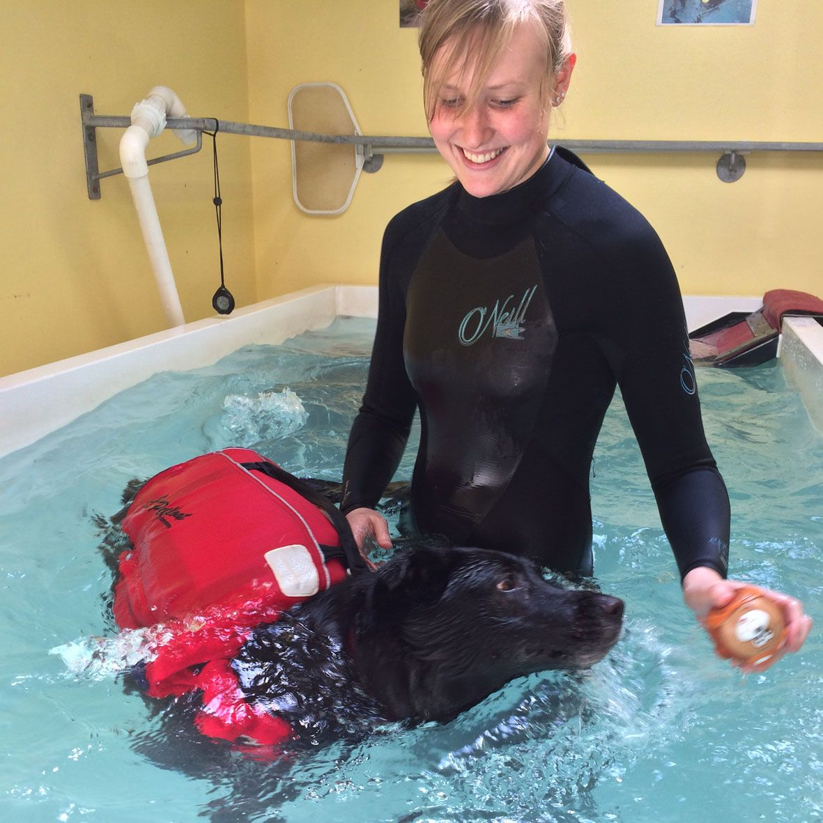 Hydrotherapy can be fun for both the qualified handler and