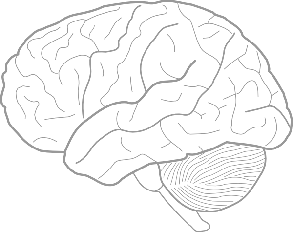 Brain Template For Kids Google Search Brain Drawing Biology Drawing Brain Diagram