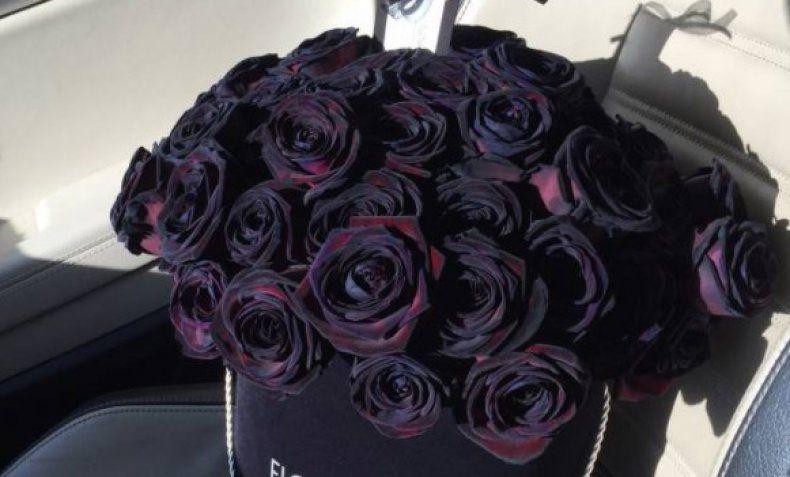 Цвета роз: бордовые розы, сорта, значение цветов, к чему ...