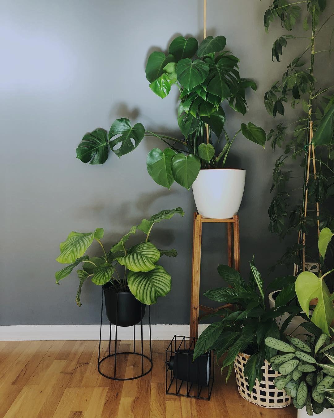 instagram plantes jardin pinterest plante jardin d coration int rieure et plantes. Black Bedroom Furniture Sets. Home Design Ideas