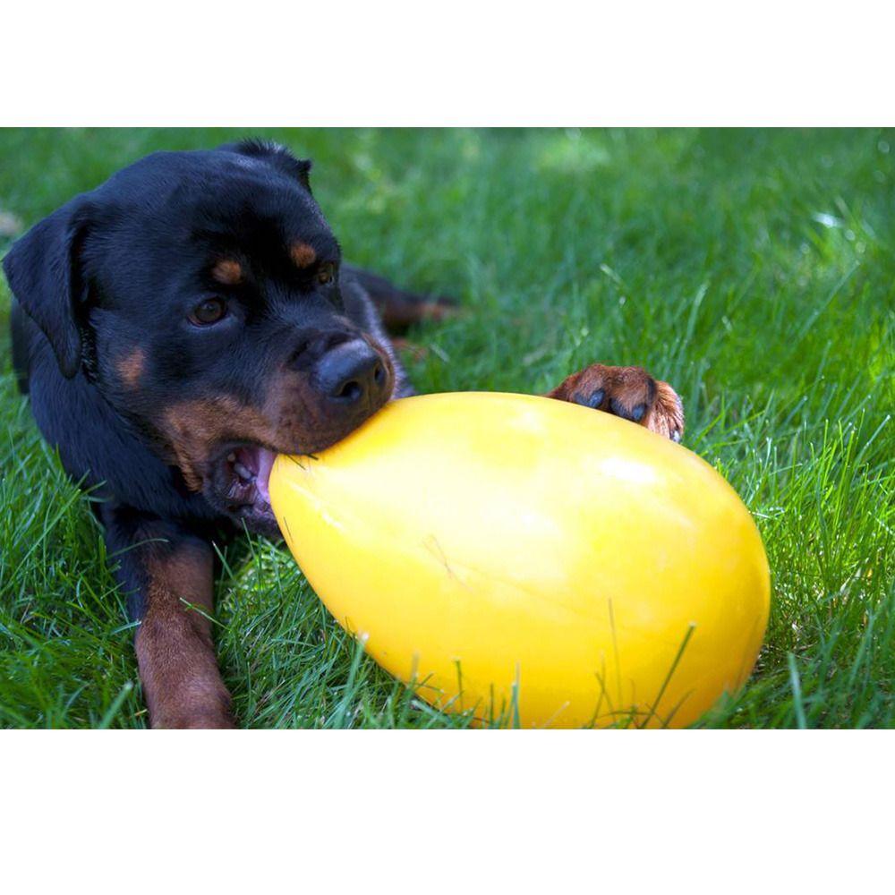 Finally An Egg Shaped Dog Ball Smaller Than An Egge Dog Ball
