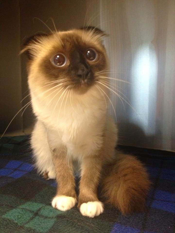 LOL pictures of cats (8:53:42 PM PDT  Tuesday, March 17, 2015) – 10 pics
