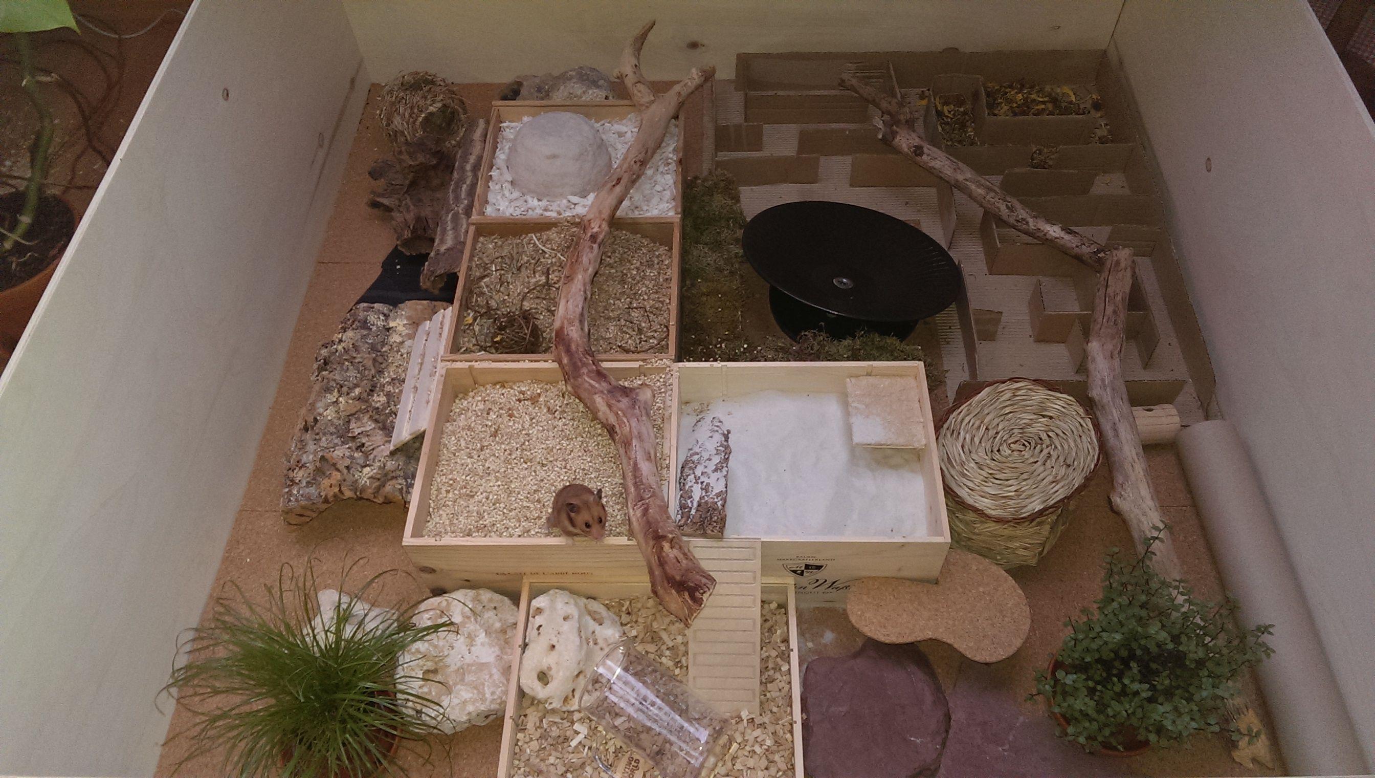 Sammelthread Auslauf Ideen Seite 3 Auslaufe Bau Einrichtung Und Vorstellung Www Das Hamsterforum De Hamster Gehege Hamster Hamster Ideen
