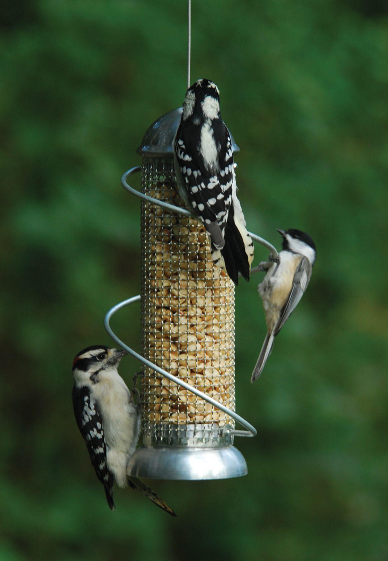 Mini Spiral Peanut Feeder 8 5 In Silver Bird Feeders Peanut Bird Feeder Best Bird Feeders