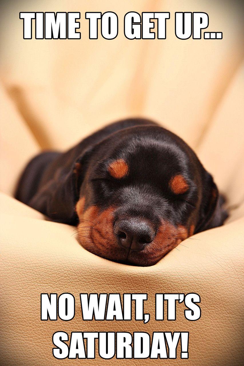 Kissen mit süßem Hunde Motiv I love my Doberman