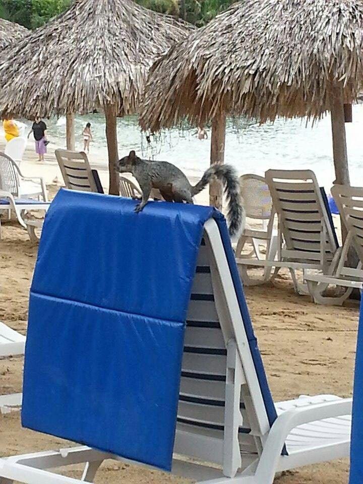¿Ardillas en la playa? SI Ardillas tropicales. #huatulco #las brisas