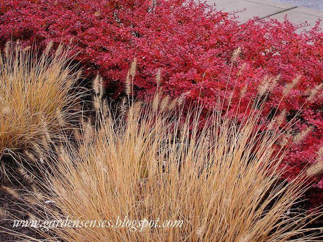 Garden Sense: November 2010
