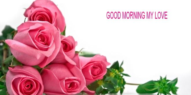 Cool Good Morning Love Rose Flower Images Free Download