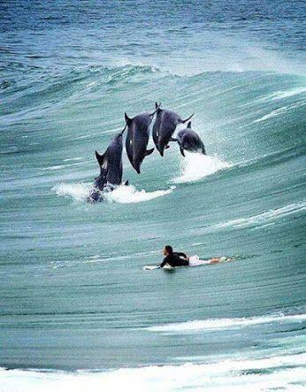 dolphin pod jumping towards surfer