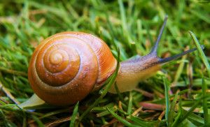 Slugs and Snails: Tips For Removing Them From Your Garden ...