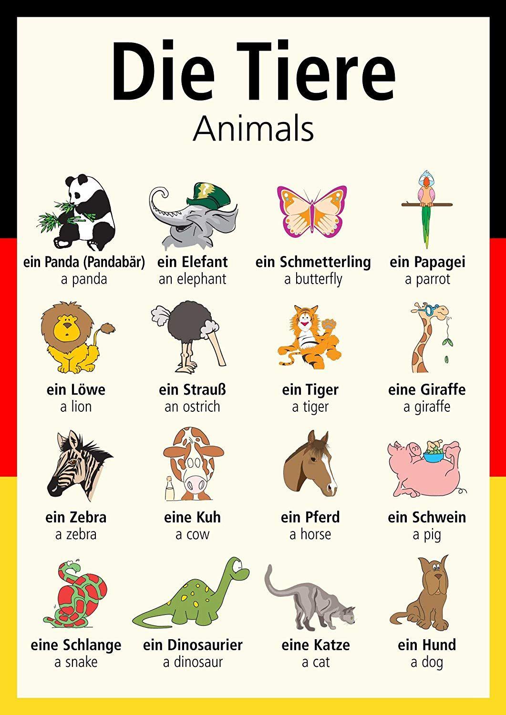тем, постер про животных на немецком объектов продаже таунхаусов