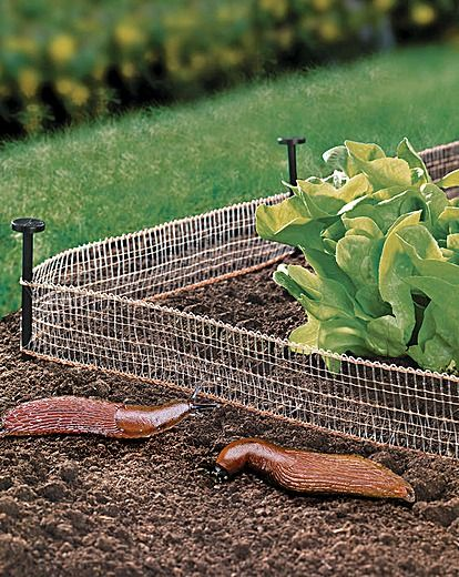 Copper Ground Barrier - this is so clever! 26feet of copper fencing that stops snails getting to your produce.