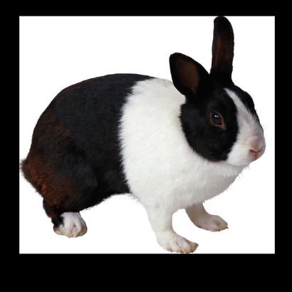 Blog De L Ile De Kahlan Black And White Rabbit Rabbit Png Rabbit