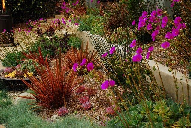 California Xeriscape Landscaping Ideas Colorful Drought Tolerant