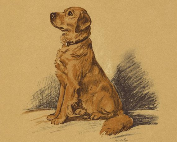 Golden Retriever Vintage Dog Book Print 1930s By Hucksterhaven