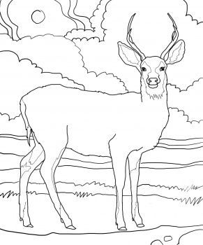 Mule Deer Deer Coloring Pages Horse Coloring Pages Bird Coloring Pages