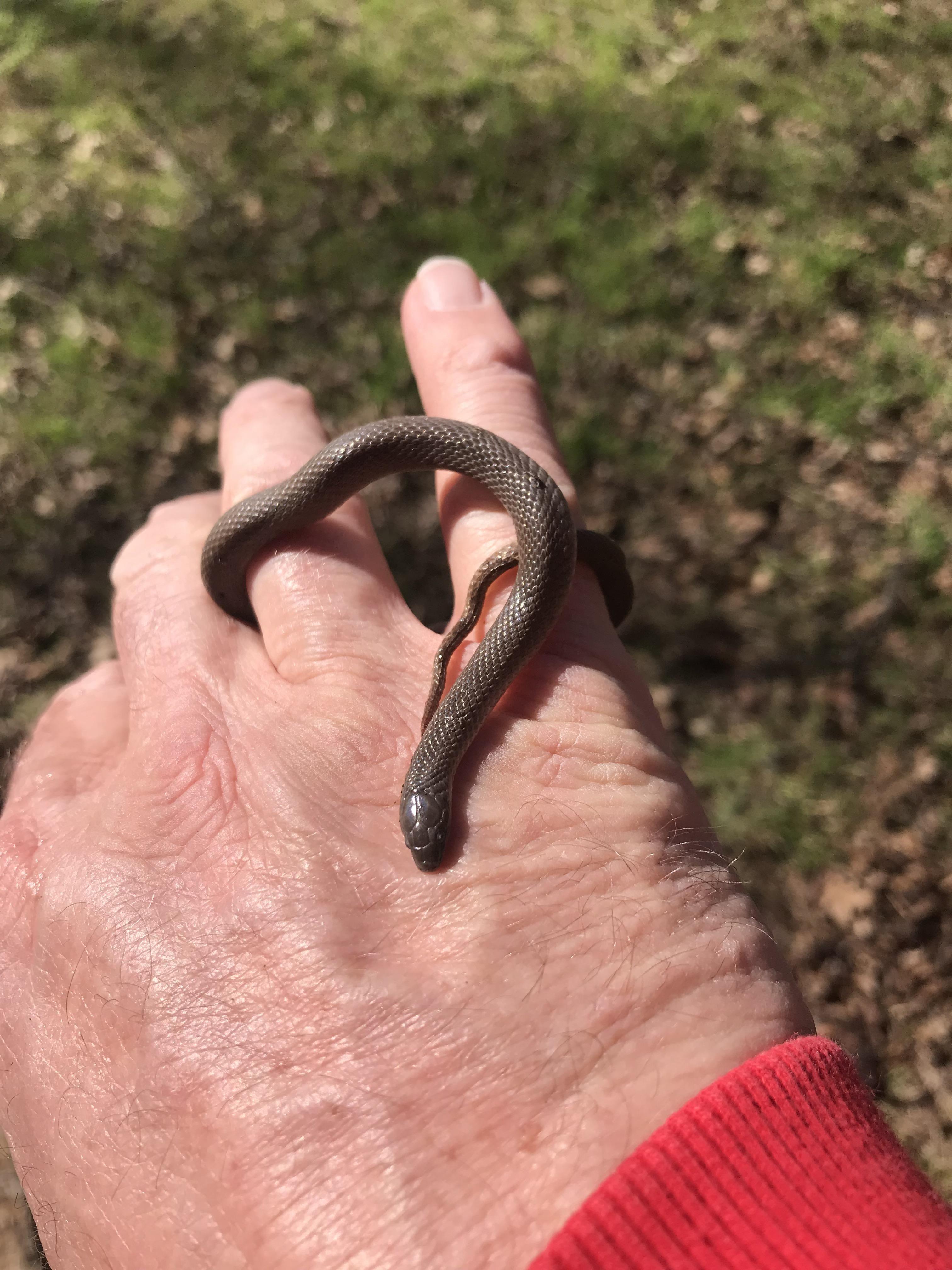 First Garden Snake This Year Gardening Garden Diy Home