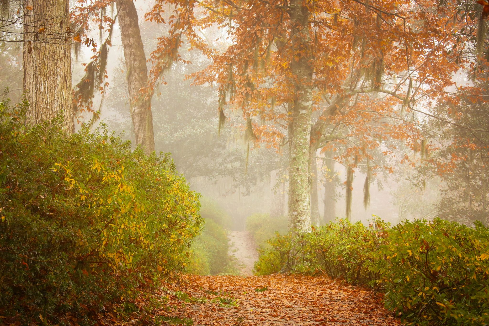 Photo Foggy Path in the Fall by Daniela Duncan on 500px  #Photo #cool #shot #photography #wonderful #amazing #stunning  #fantastic #500px #magic #color #photography #carde