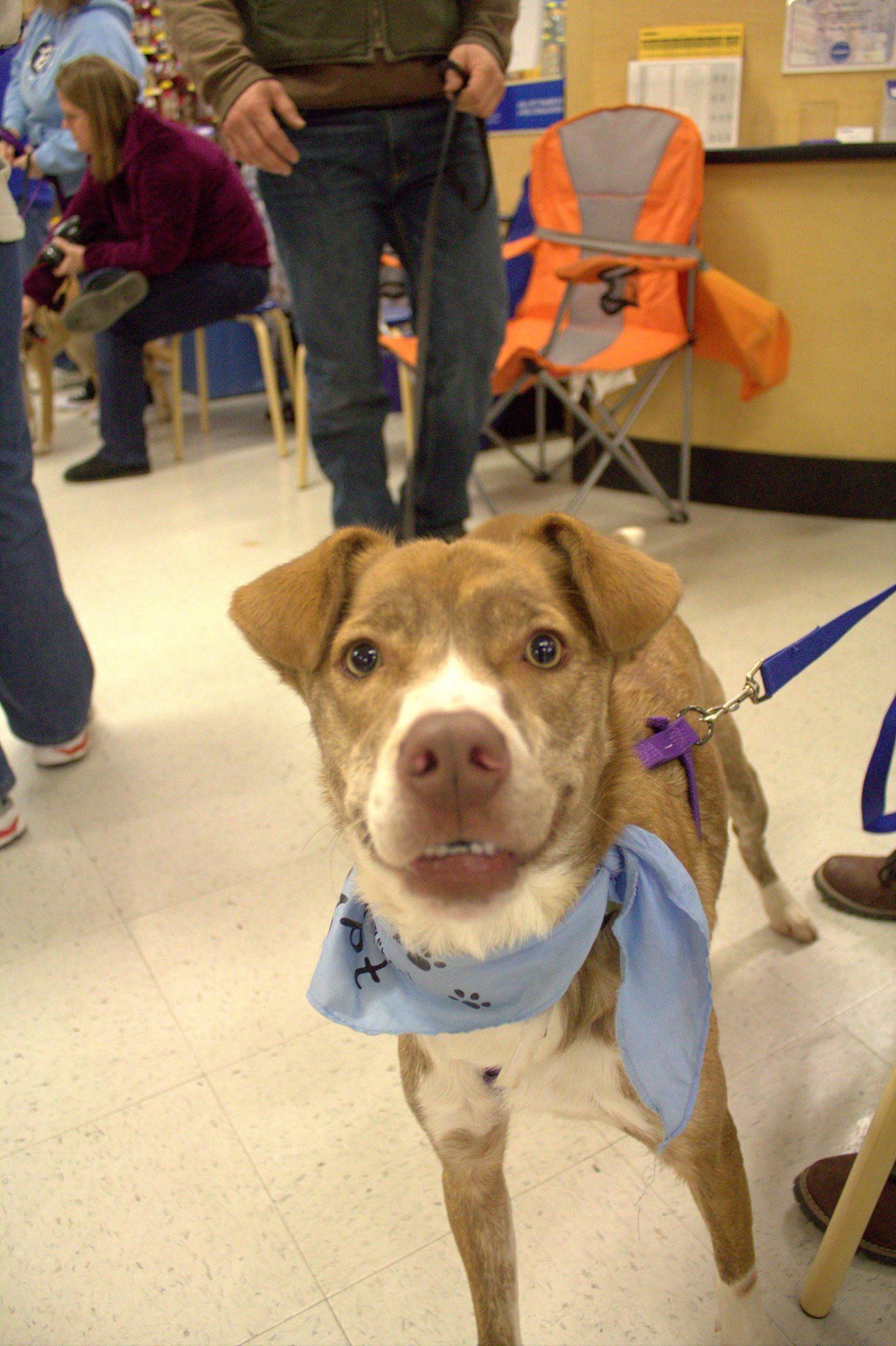 Check Out This Winning Smile Photo By Erika Weaver During An Oph Adoption Event At The Petsmart In York Pa Rescue Dogs Dog Breeds Dogs