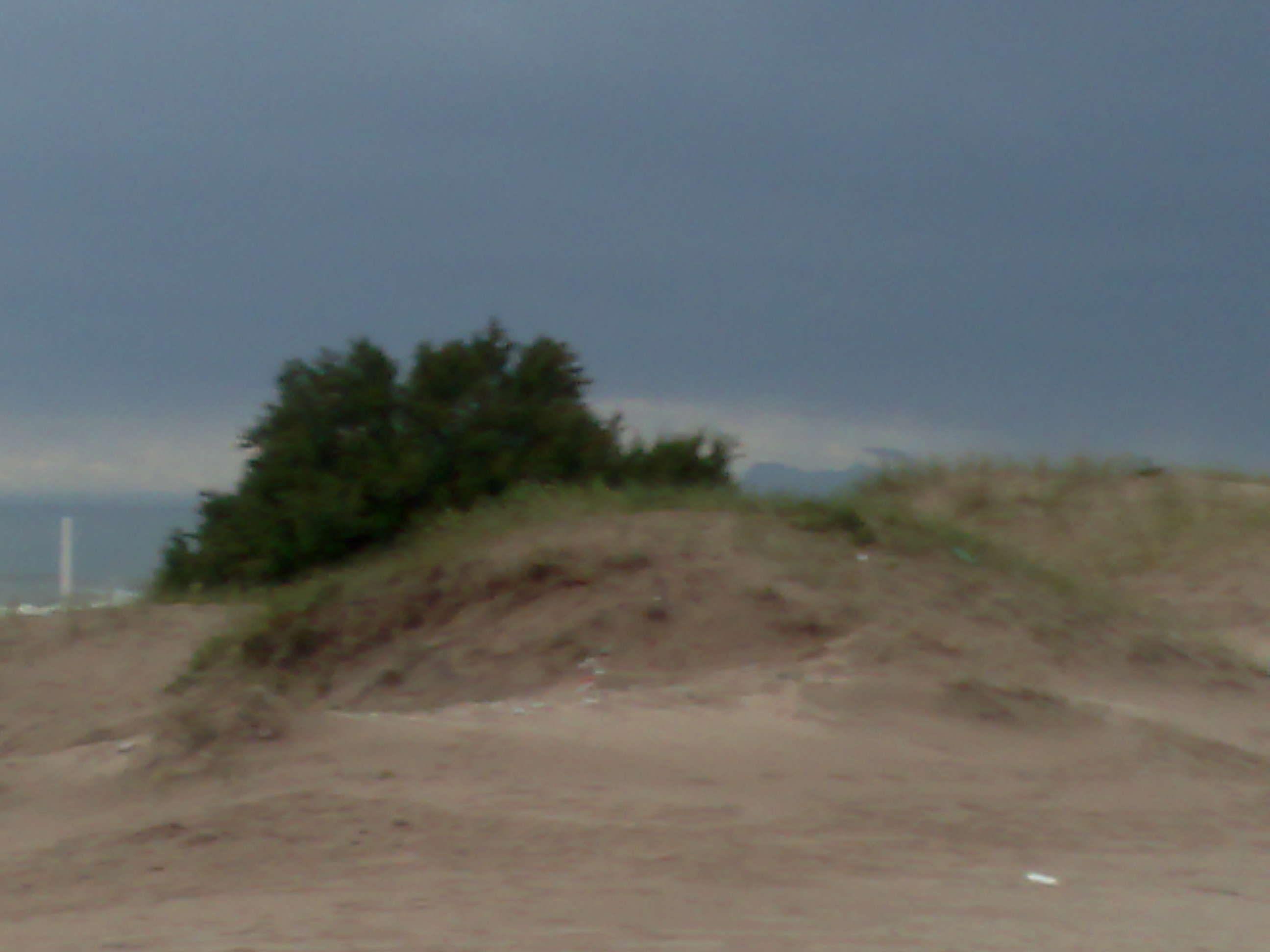 Tamariscos y dunas gesellinas