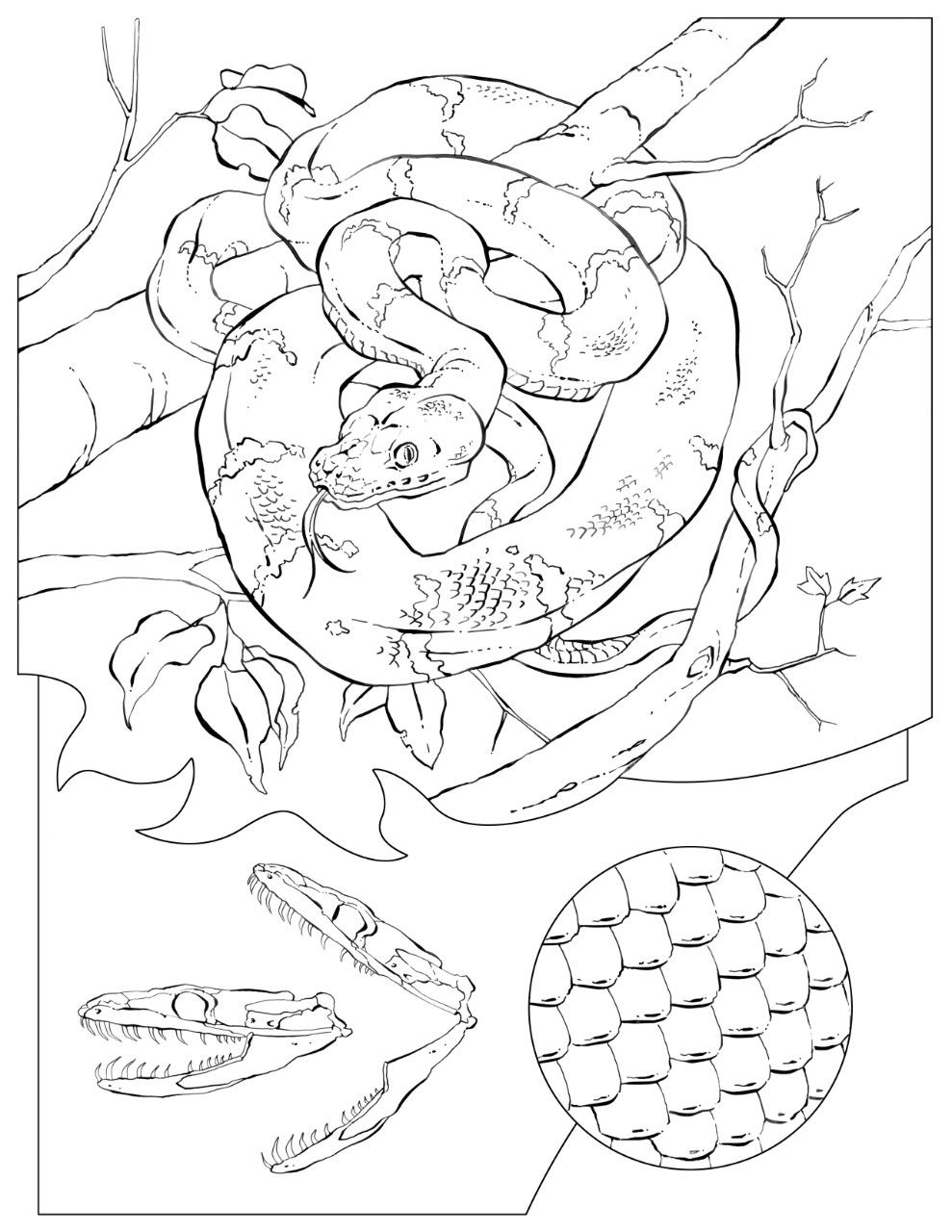 Coloring Book Animals A To I Shark Coloring Pages Coloring Books Dinosaur Coloring Pages