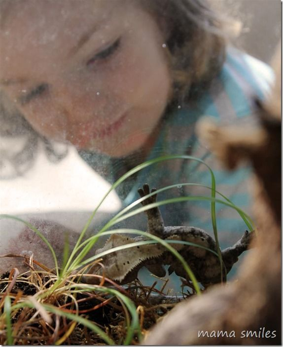 Learning by doing: helping kids learn about pets and responsibility by temporarily taking care of a gecko. from @MamaSmiles