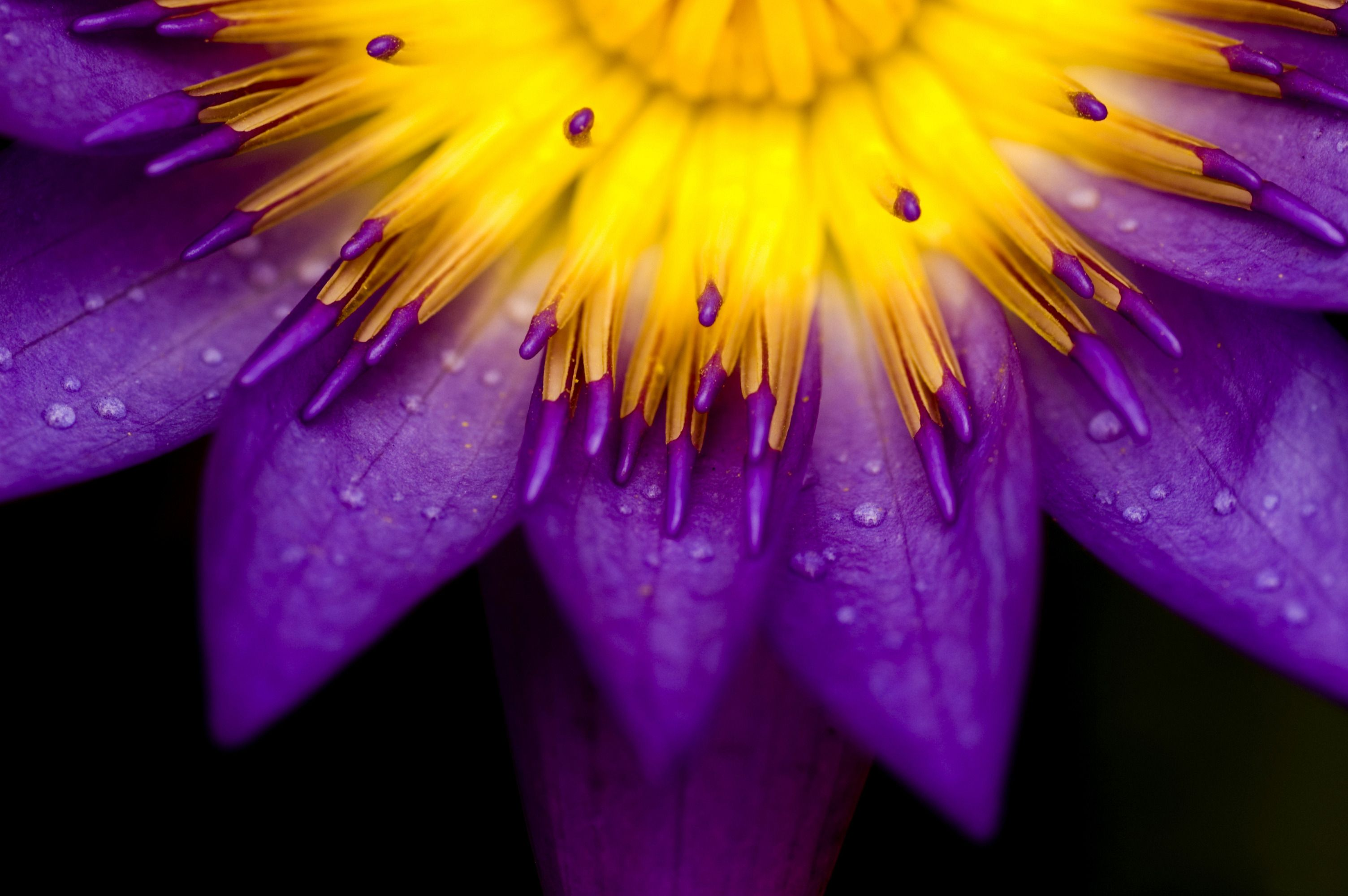 Purpleandyellowflowers Purple Yellow Flower Wallpaper For