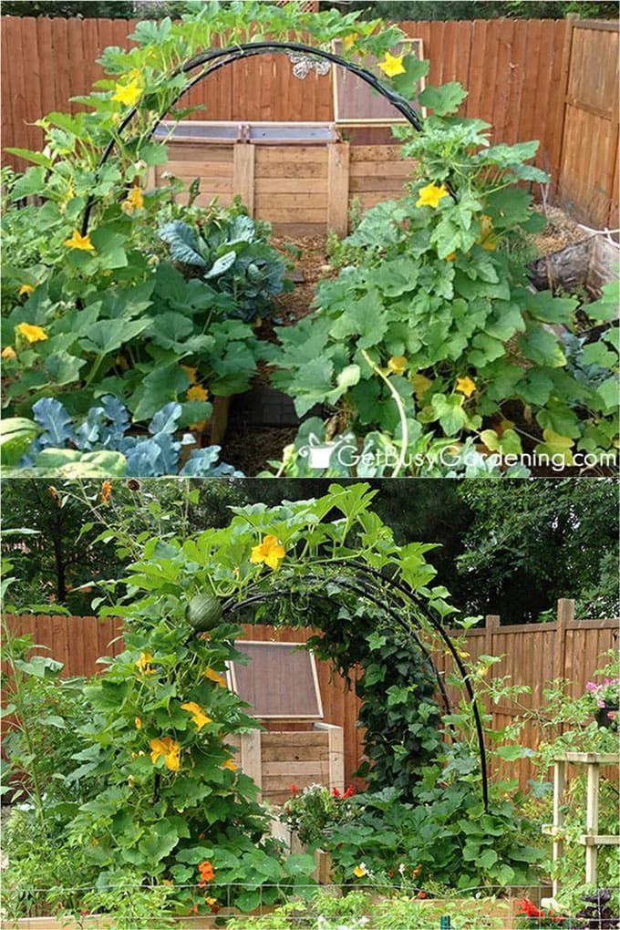 24 Easy Diy Garden Trellis Ideas Plant Structures A Piece Of Rainbow In 2020 Diy Garden Trellis Garden Trellis Diy Garden Projects