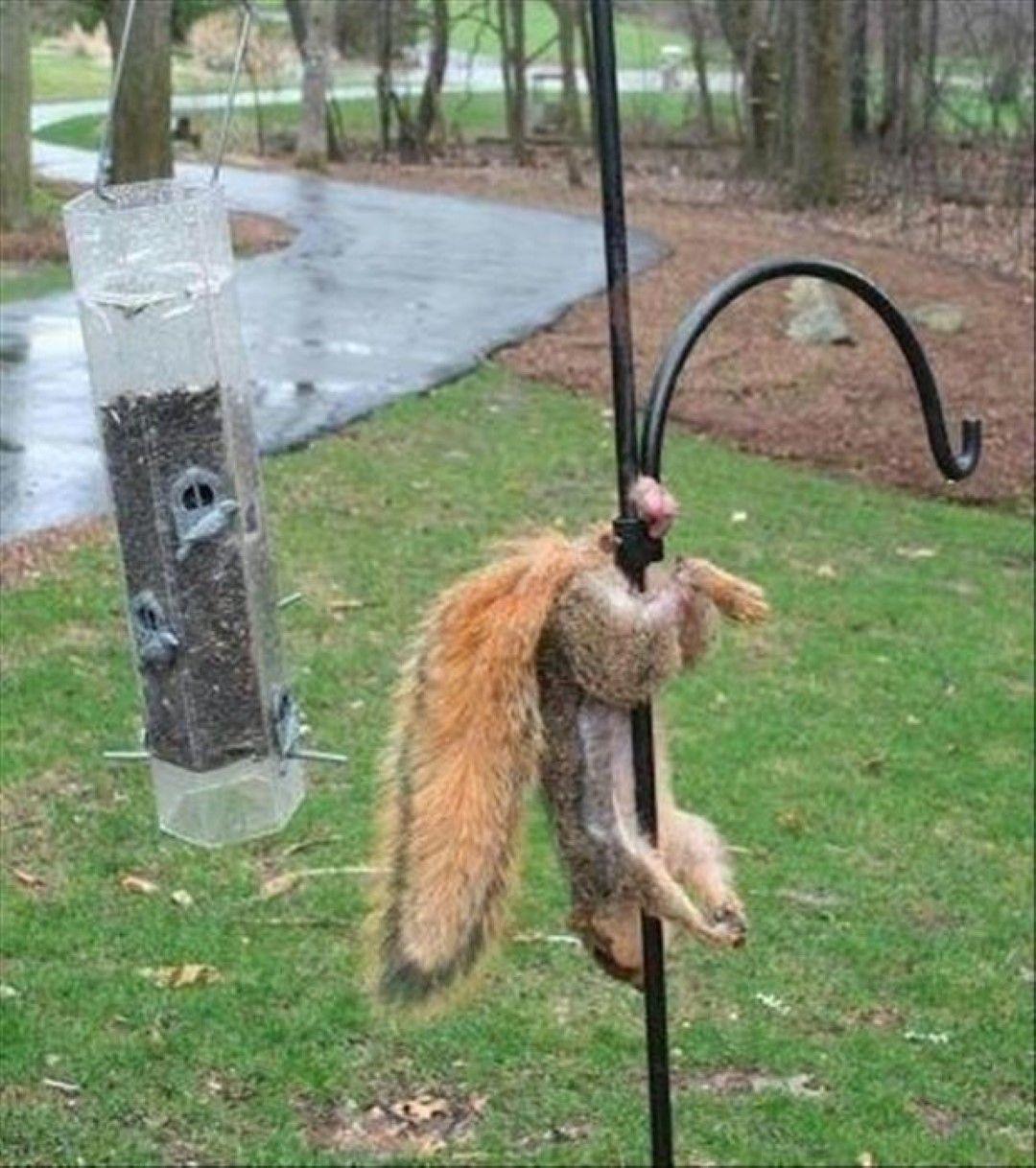 Funny Animal Fails (21 Pics) | Peachya