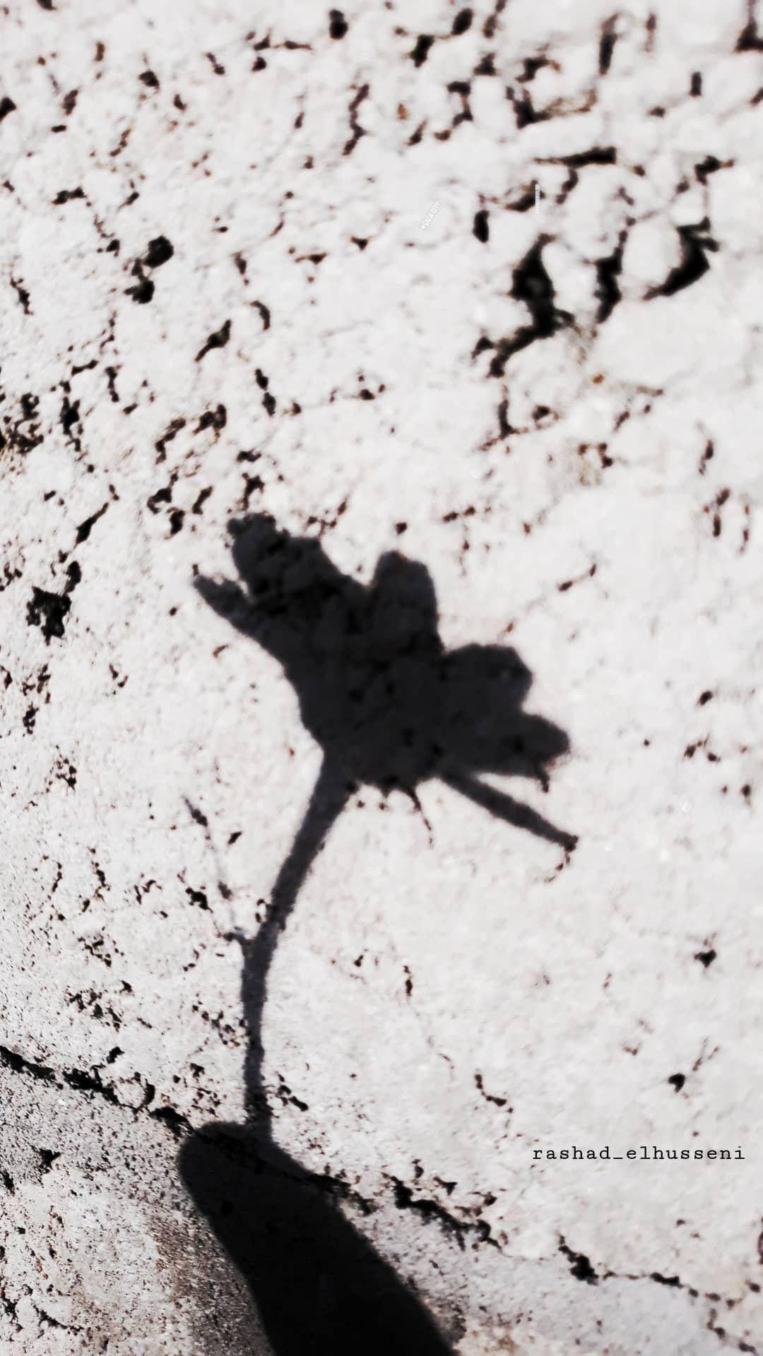 لقطة لقطه تصوير تصويري صورة كاميرا كانون نيكون عدستي عرب فوتو لقتطي لقطة جميلة غرد بصور Instagram Instagram Photo Photo And Video