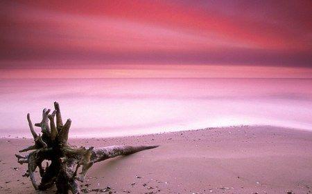 Pink Sands Pink Sand Beach Bahamas Pink Sand Beach Pink Sand Beach Bermuda