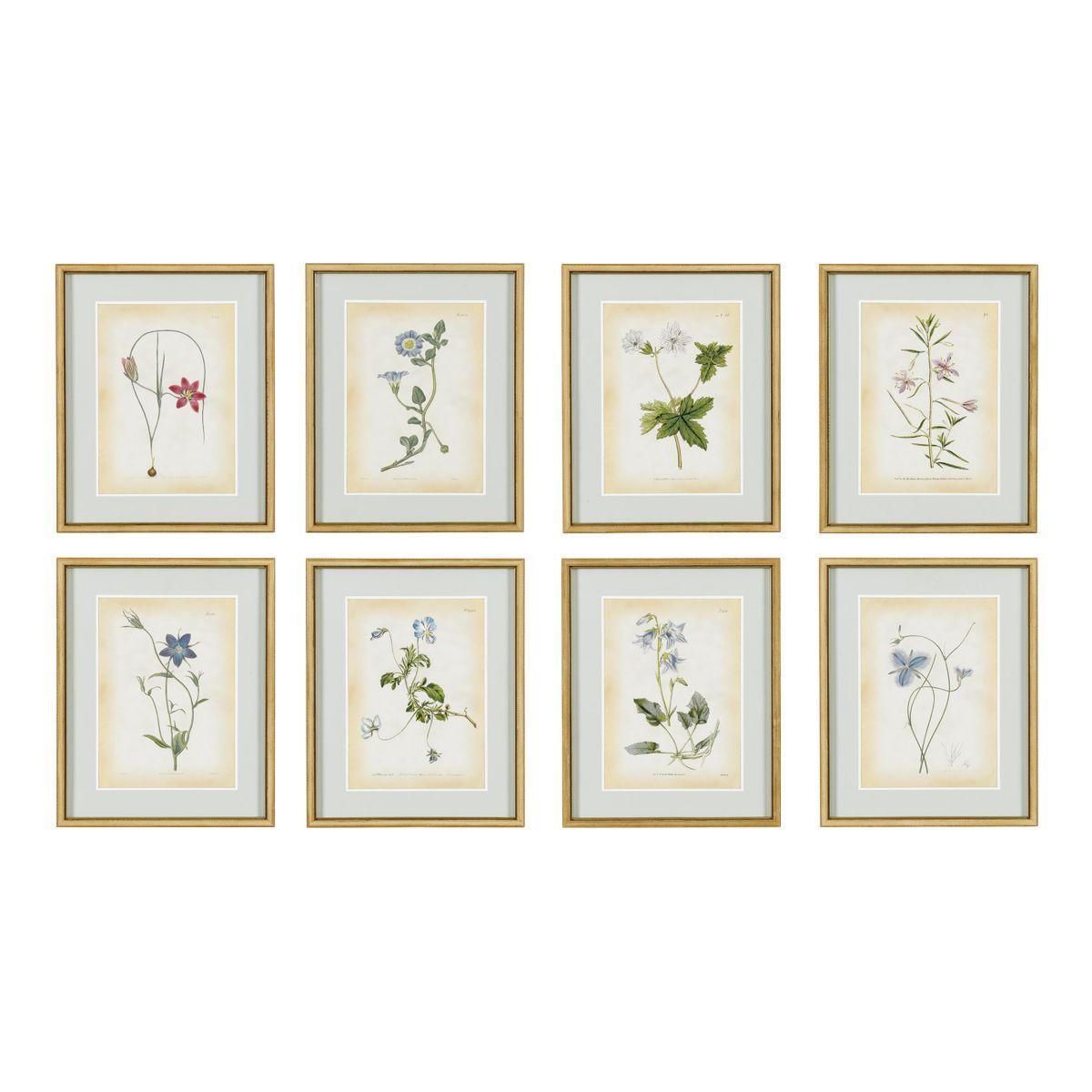 Curtis Botanical Framed Print Framed botanical prints