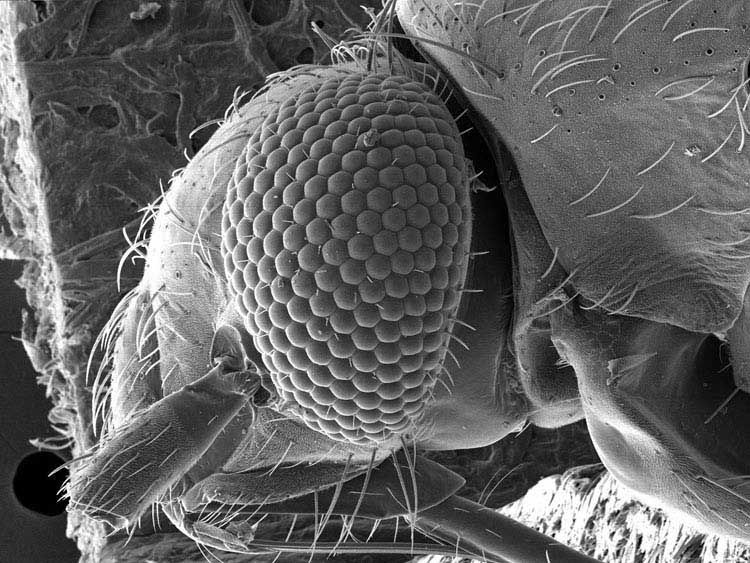 Top 25 ideas about Life under a microscope on Pinterest | Electron ...