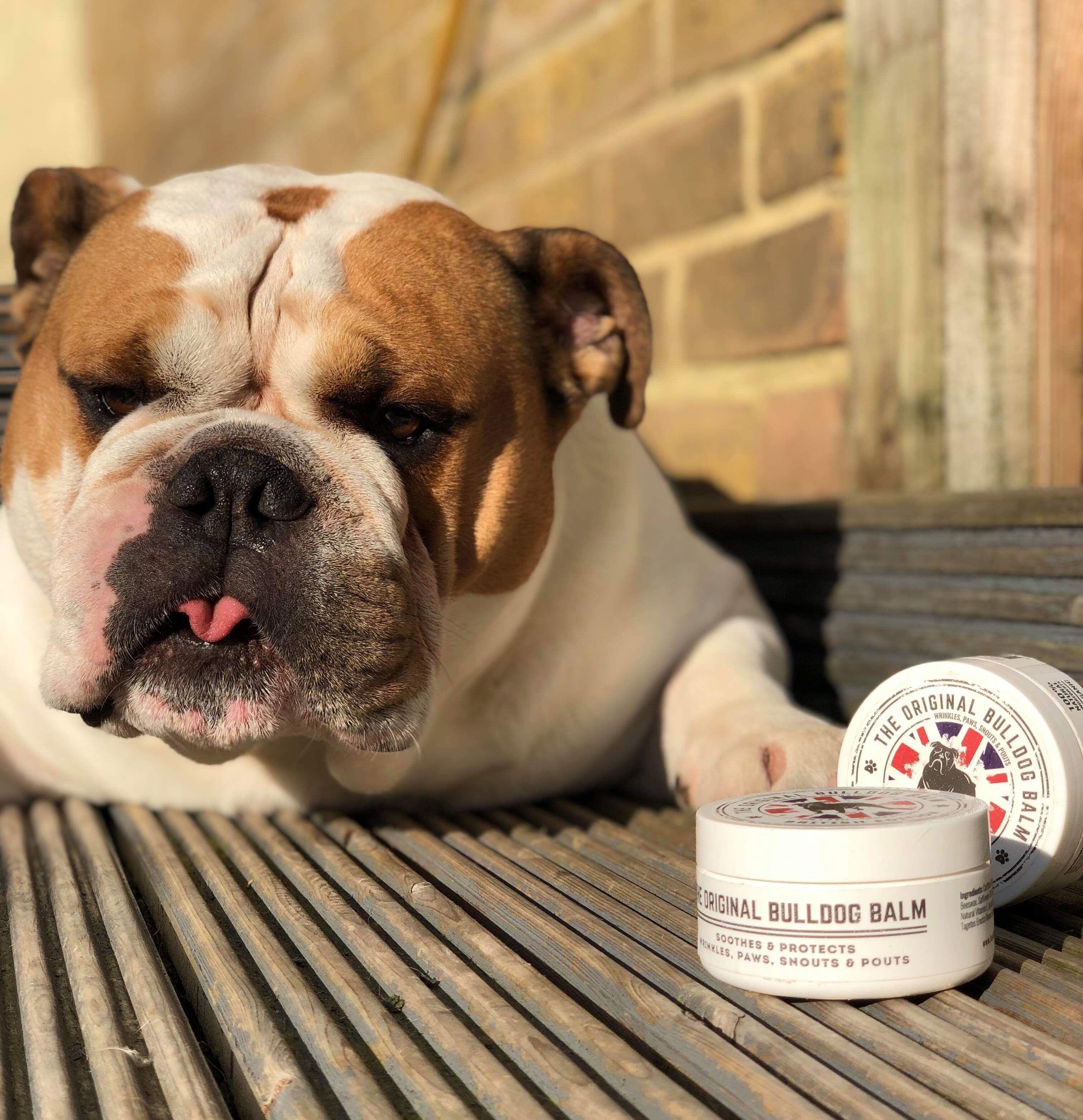 British Edition Dog Nose Balm Bulldog, Dry dog paws