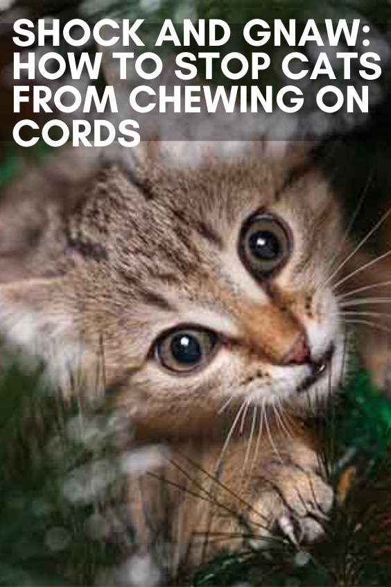 Shock And Gnaw How To Stop Cats From Chewing On Cords In 2020