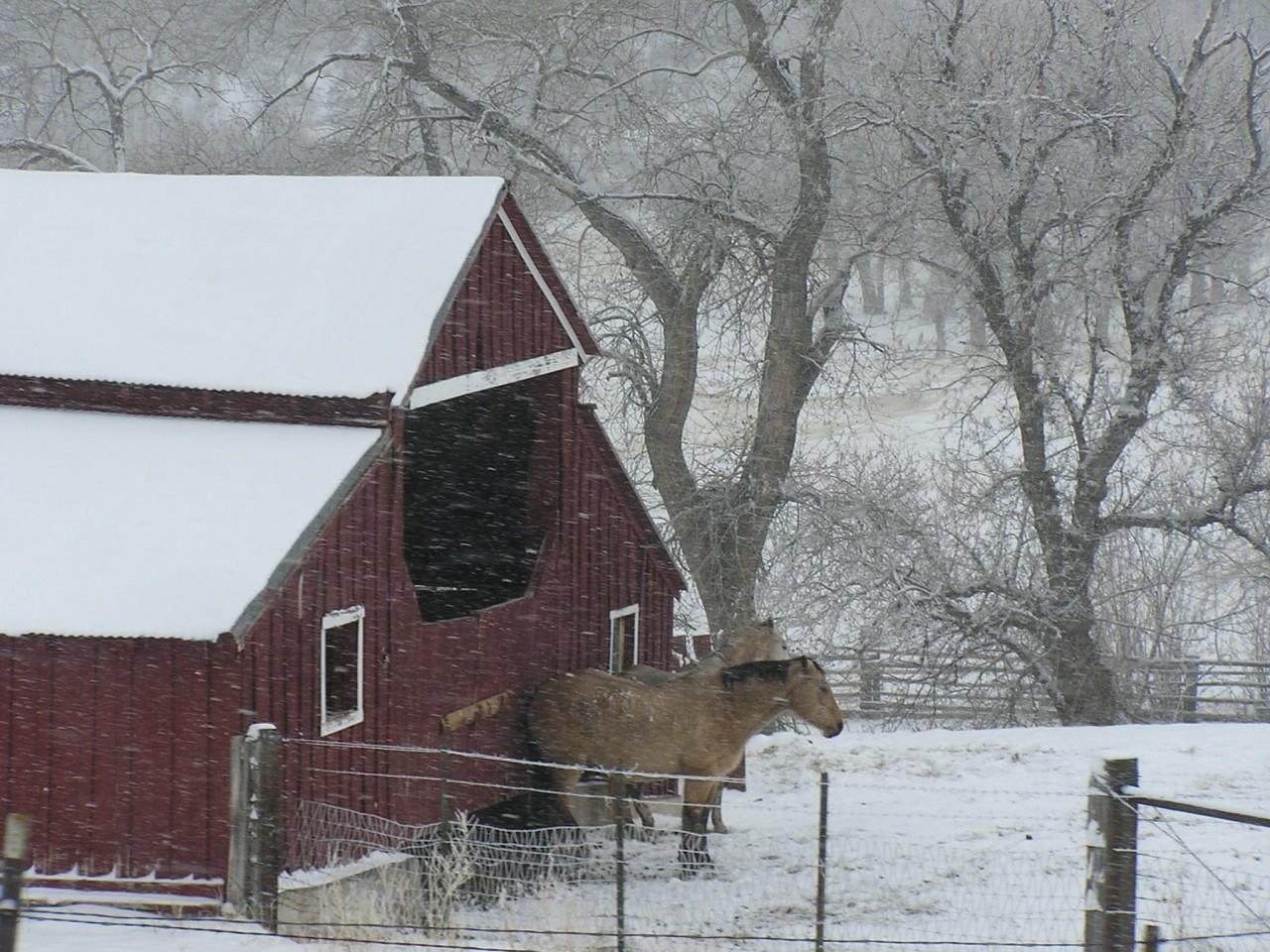 Winter barn n horse