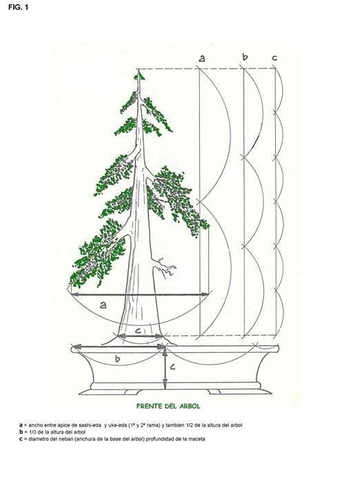 pin de georgi game of the trone en bonsai