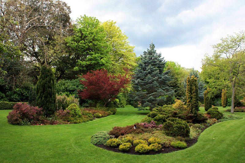 Rboles arbustos y flores en los jardines de merrion for Arbustos para jardin