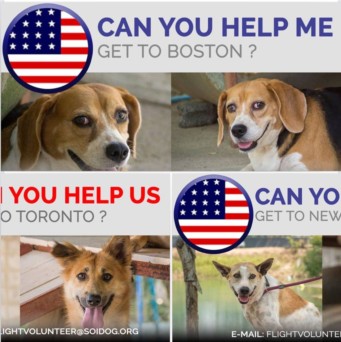 Can you help us get adopted dogs to their forever homes
